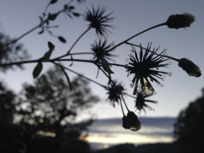 夕日をバックにした植物のシルエット