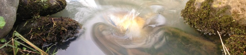 池の水面の反射