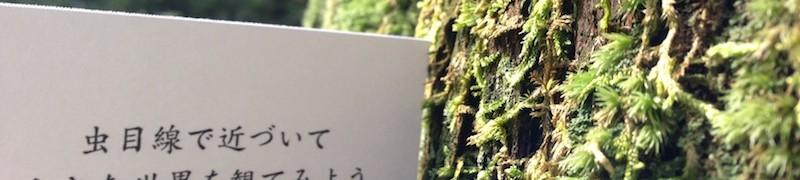 虫目線で苔