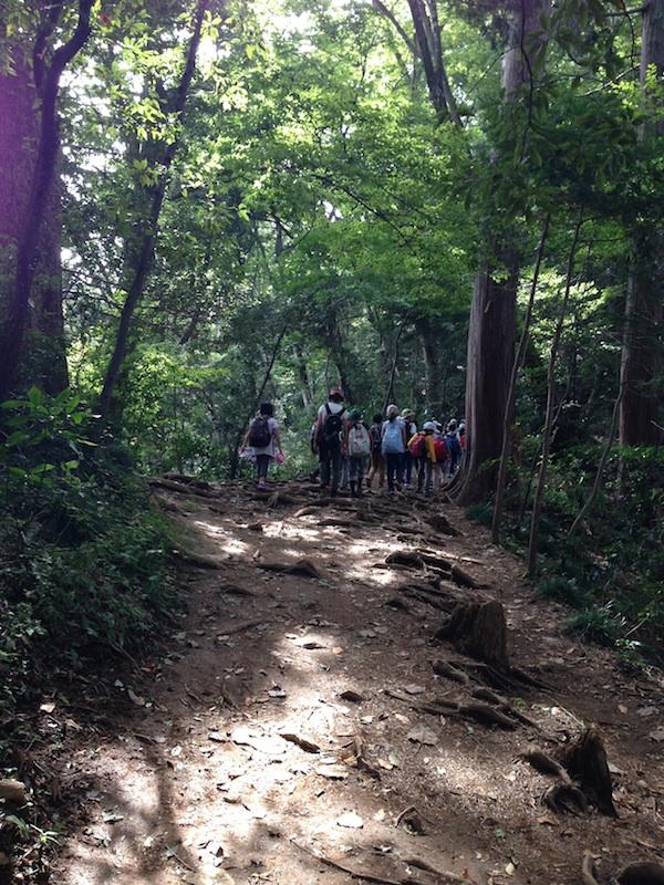 高尾山感覚開き散歩:登山コース・豊かな自然・薬王院や天狗などの観光スポット・ハイキング・グルメ