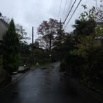 東へと続く道(朝)