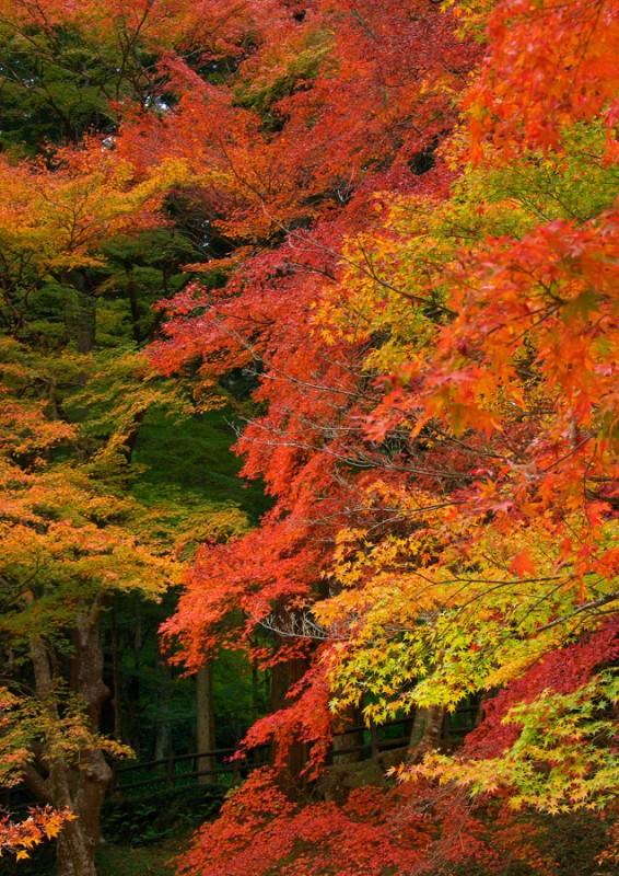香嵐渓の紅葉★017