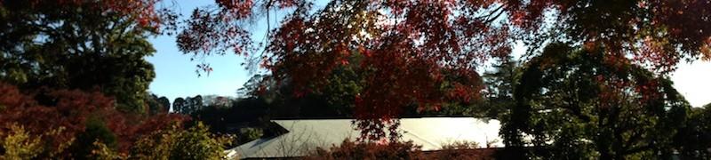 12/6 紅葉を感じる感性をひらくー鎌倉感覚開き散歩in獅子舞&瑞泉寺開催報告その1