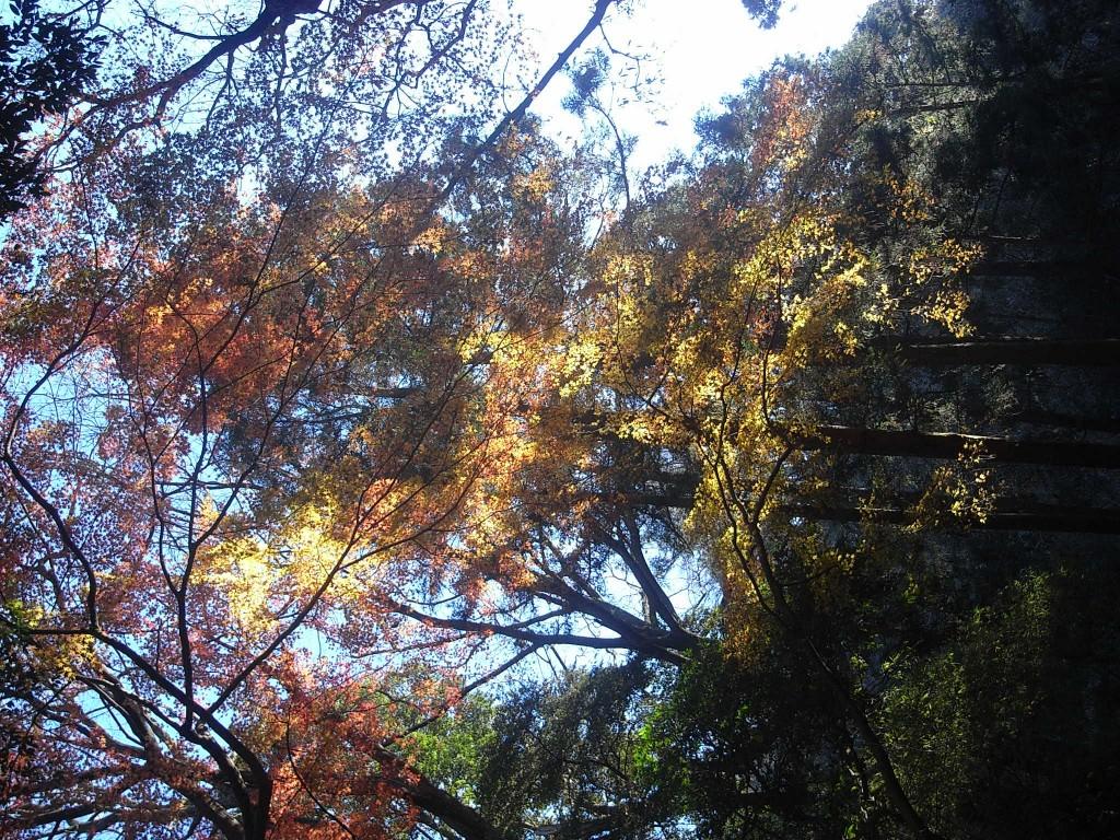 自然を感じる感性をひらく:紅葉を豊かに感じる鎌倉感覚開き散歩で行く獅子舞の谷