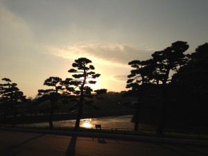 皇居にて夕日をバックに松のシルエット