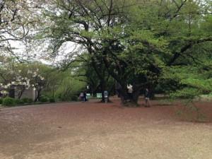 20140419新宿御苑4