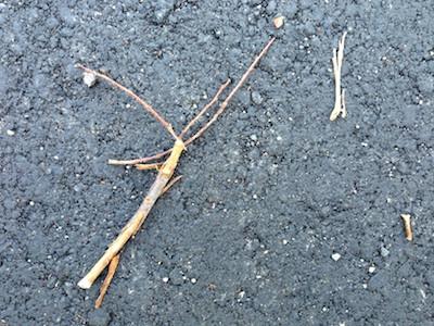 地面に落ちた枝たち