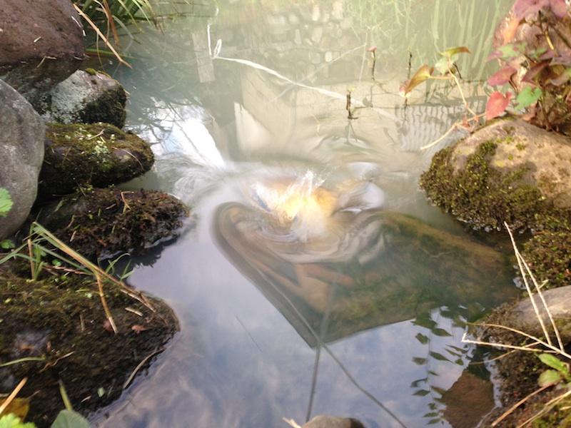 鏡のように風景を映し出した池+鯉の動きで不思議と歪む