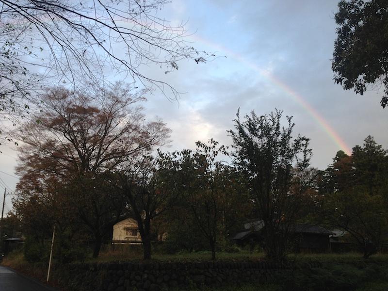 木の上の空に虹