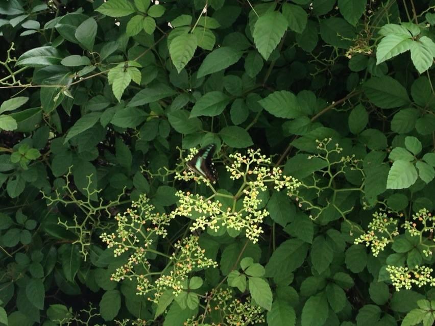 幸せになりたい・幸せにしたい時に幸せになる・幸せな気持ちになる画像006:緑の中を舞う蝶々